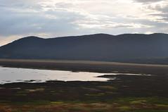 Mormon Lake AZ