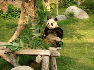 125 Reuze panda zit te eten