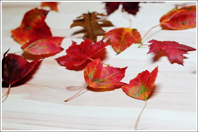 Leaf Edition 1