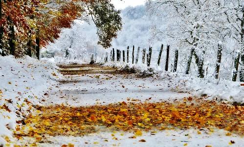 ~~Couleurs d'automne dans le blanc...~~ by Joélisa