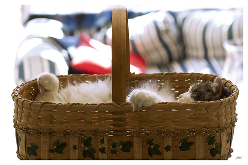 A basketful of cuteness