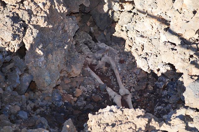Skeleton, Maipés Parque Arqueológico, Ancient Canarian Tombs, Agaete Valley, Gran Canaria