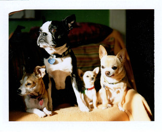 dog group portrait, february 8