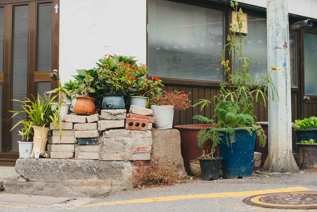 Insadong, bricks, plants