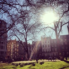 Obligatory photo of the onset of Spring. Berkeley Square looking stunning in the sun.