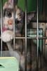 Kittens_4