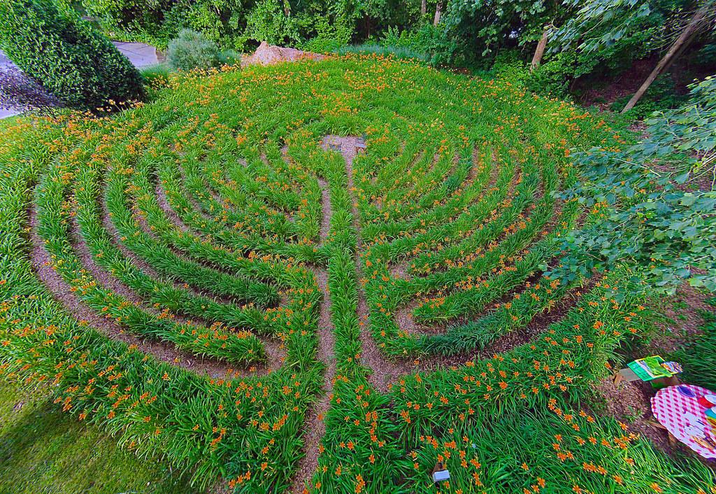 Daylily Labyrinth