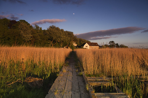 road moon grass ferry reeds wooden path passage aust
