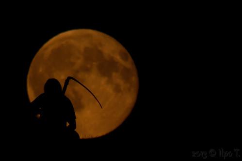 moon silhouette night canon reaper fullmoon singleshot supermoon superkuu