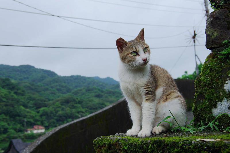 再遊猴硐看貓兒