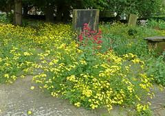 Bradford Cathedral graveyard