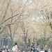maruyama park01