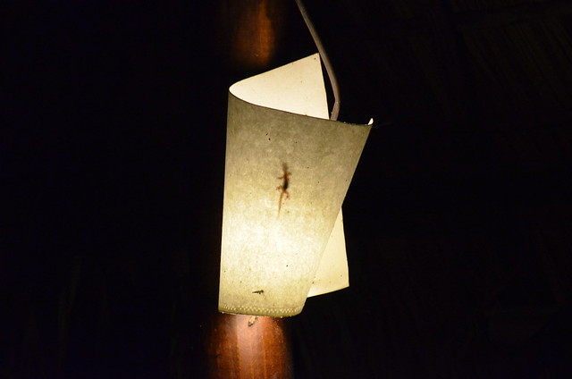 Lizard in the Lamp