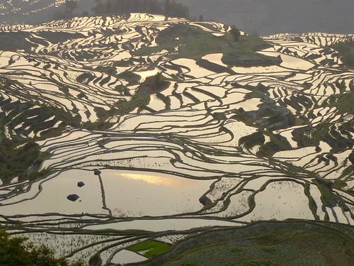 Yunnan13-Yuanyang 1-Duoyishu (64)