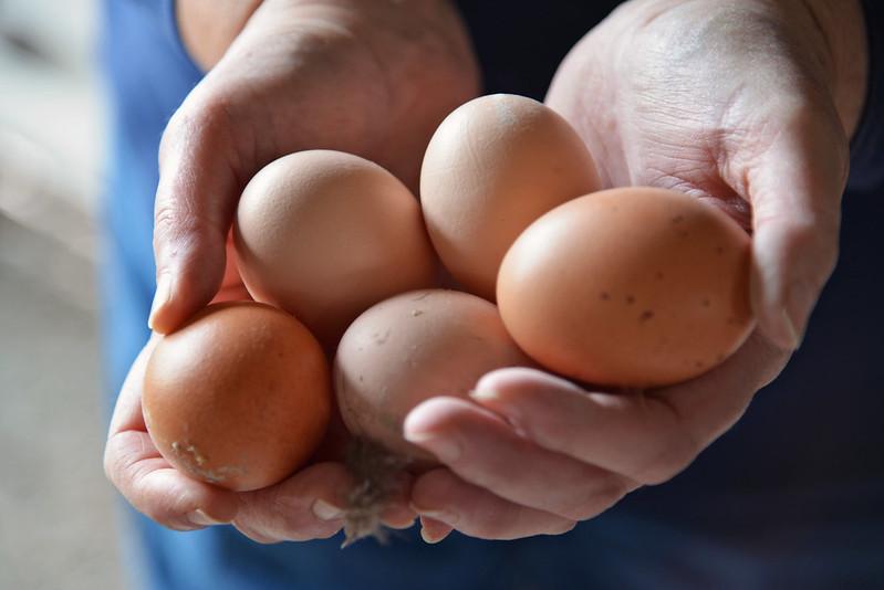 Eggs in Hands
