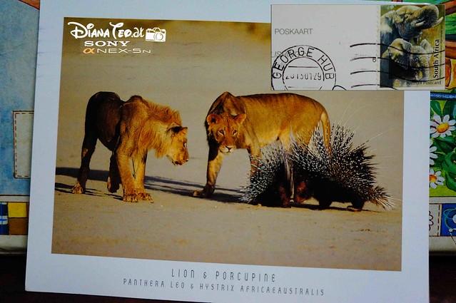 Postcard 22 - Africa