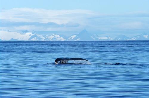 2008-07 Alaska 0668