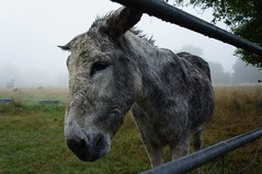Poor wet Donkey