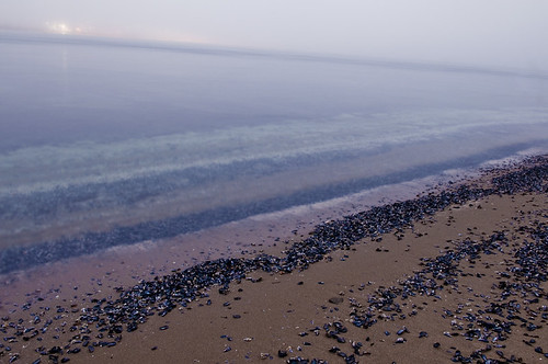 Seashells by the Seashore by petetaylor