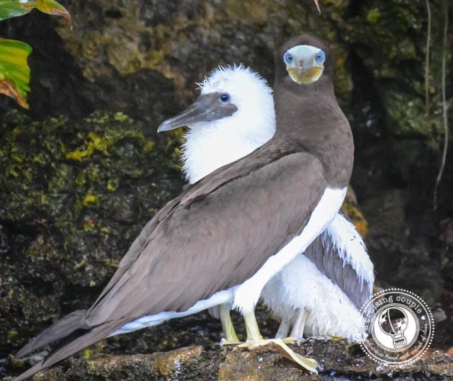 Bird Island_3