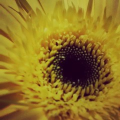 #sunflower #dinner #night #friends