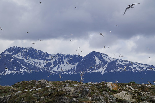 076 Vogeleiland