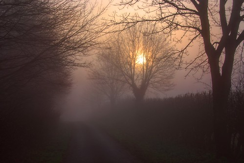 uk trees england mist nature landscape dawn spring nikon scenery northamptonshire 2014 grangeroad d80 geddington