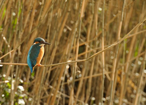 Kingfisher hide rental.