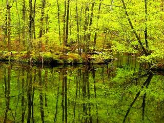 Spring Green Reflection