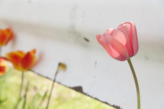 Sakaegawa Flowers