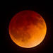 Total Lunar Eclipse, April 15, 2014 by Garrett Lau