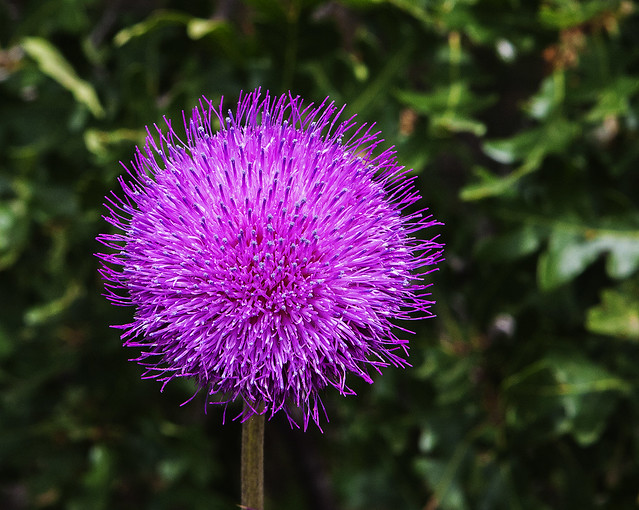 Wild Flower 20d_2190