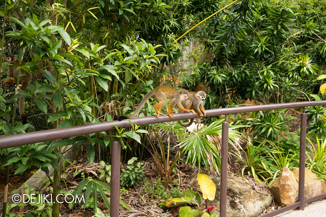 River Safari - Squirrel Monkey