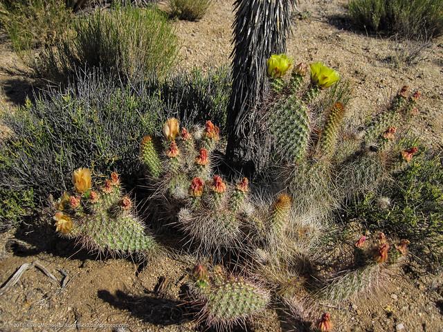 flowers in the desert full play pdf
