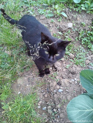 [Updated] Thu, Jun 27th, 2013 Found Male Cat - Rhode Area, Croghan, Offaly