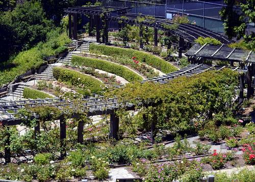 Bay area 4 tilden botanic garden berkeley rose garden My secret garden bay city