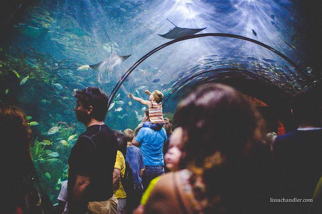 Aquarium -2