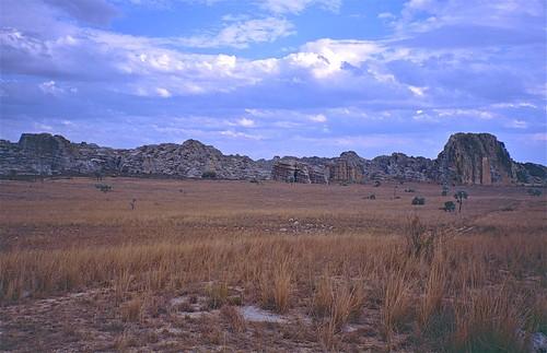 Dry Savannah