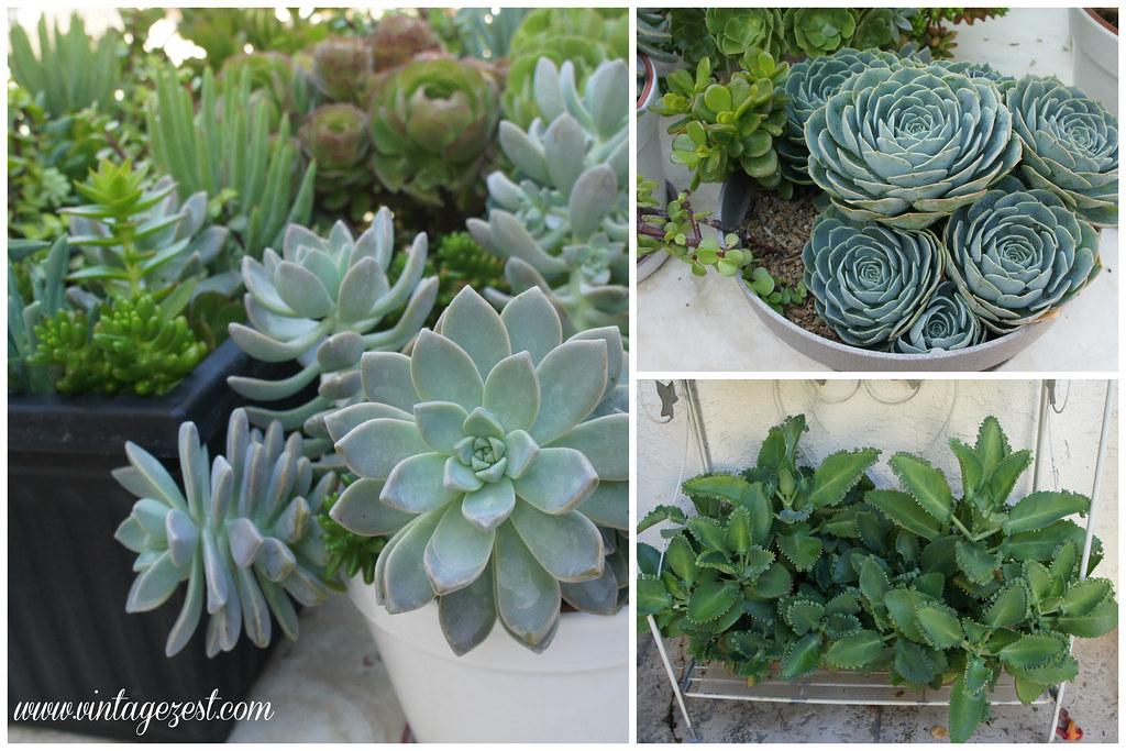 Succulent Garden 2