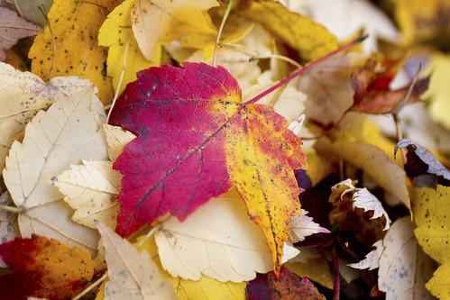 11-13 fall-9542-Edit-27