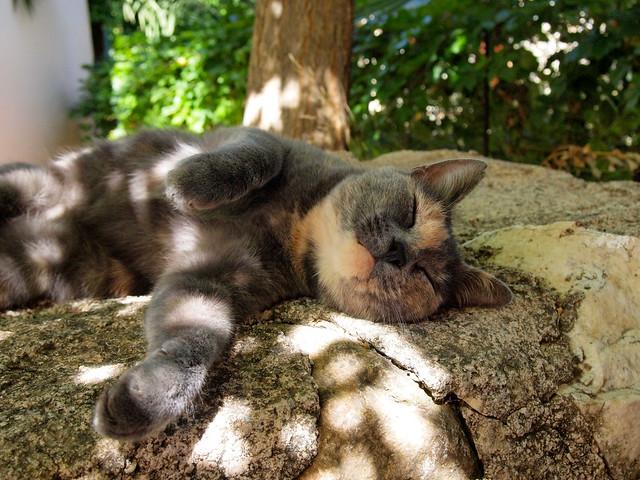 Greek kitty in Halki, Naxos