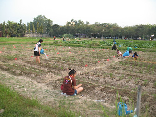 Food production at Chiangmai University
