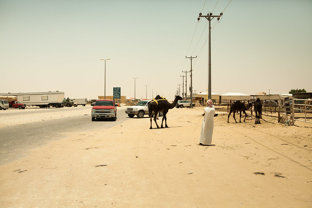 Al Hofuf Saudi Arabia  City pictures : Camel market, Al Hofuf, Saudi Arabia | Flickr Photo Sharing!