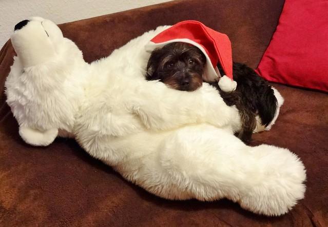 Gleich kommt der Weihnachtsmann***in one moment Santa is coming