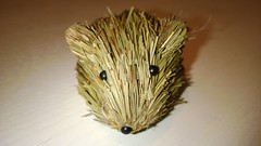 animal(1.0), domesticated hedgehog(1.0), rodent(1.0), erinaceidae(1.0), degu(1.0),