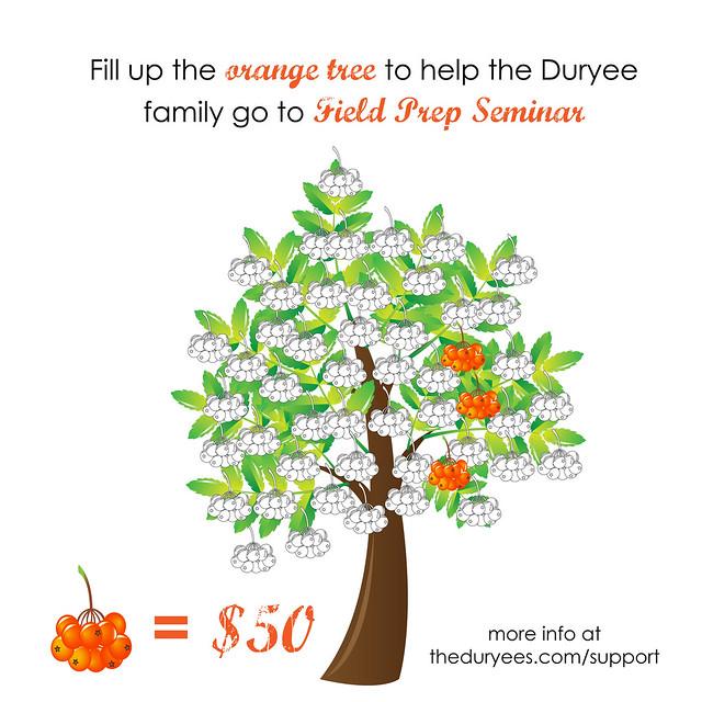 5050-orange-tree