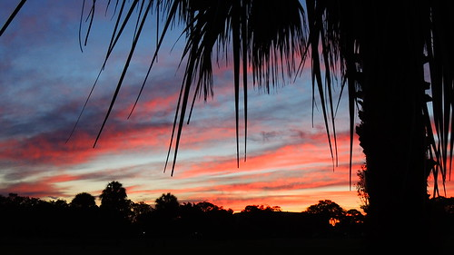 morning blue trees red sky orange silhouette yellow night sunrise palms dawn flickr florida bradenton mullhaupt cloudsstormssunsetssunrises jimmullhaupt