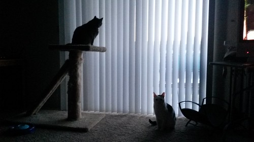 Evening by the blinds by christopher575