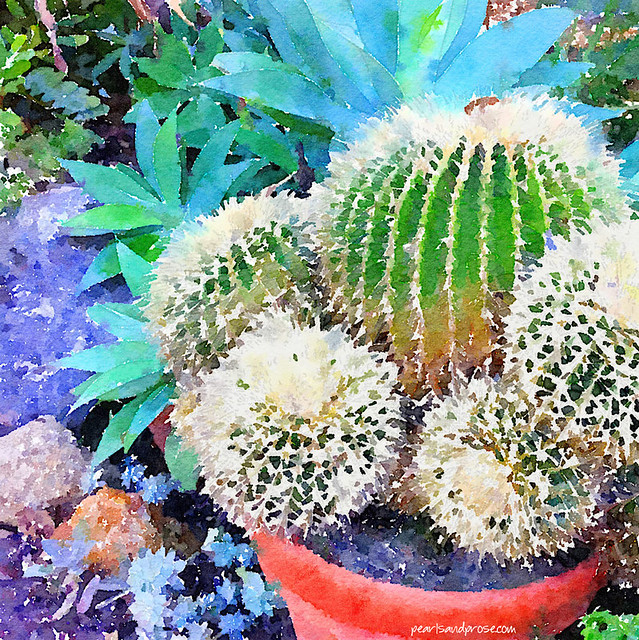 cacti_water_web