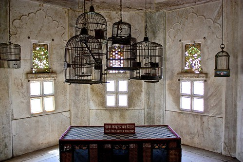 cages for carrier pigeons